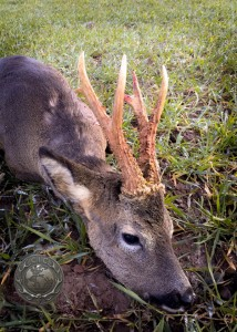 Silver medal buck resized