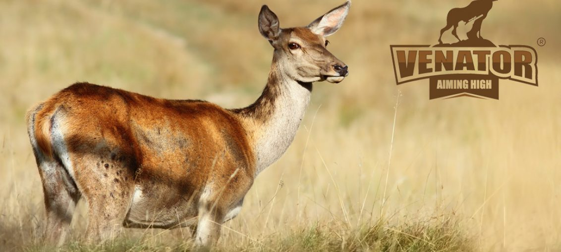 TIME TO BOOK ROE DOE AND RED HIND STALKING FOR 2017/2018