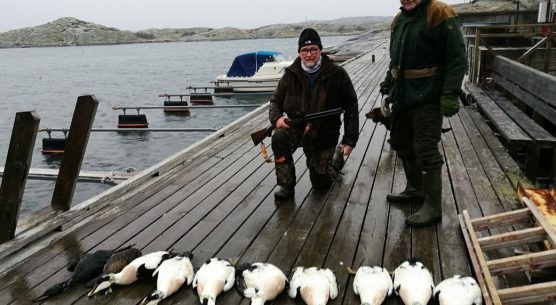 WILDFOWL HUNTING IN SWEDEN